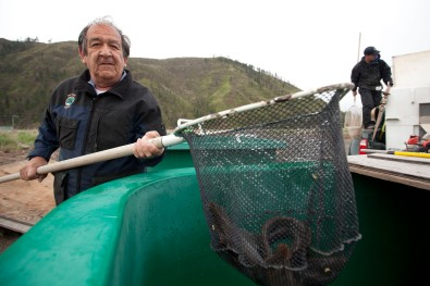 Elmer Crow Jr. of Nez Perce Fisheries transports lamprey eel from tanks to rivers.